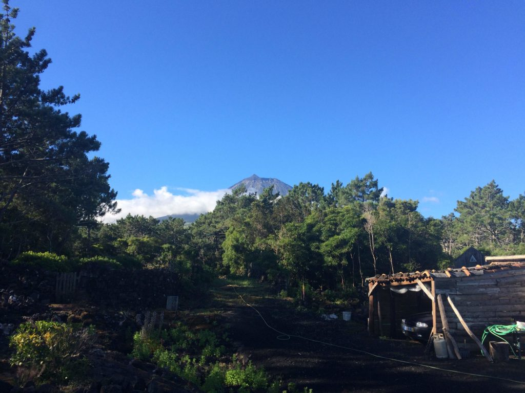 How to spend one (artistic) weekend in Pico Island, Azores