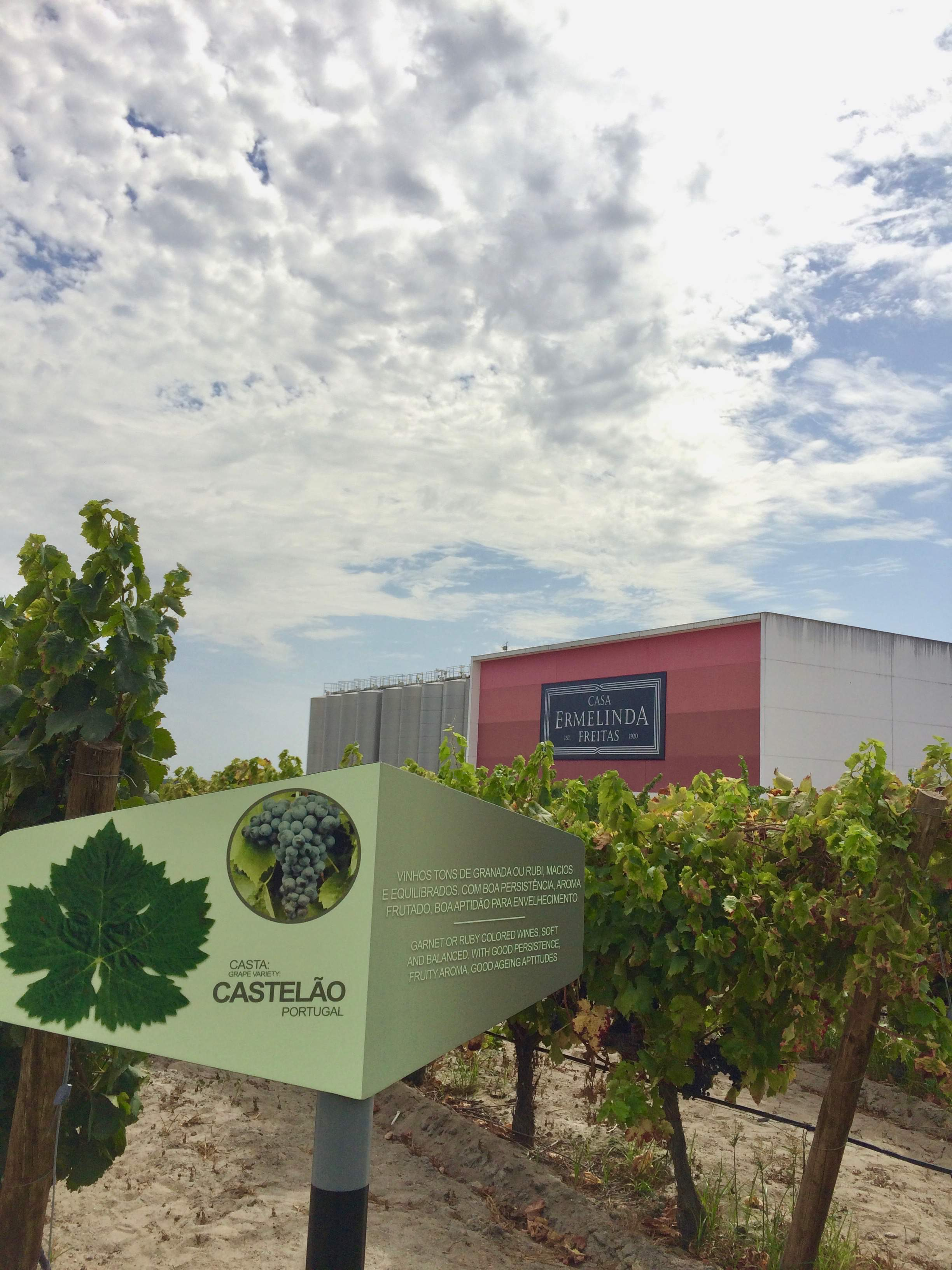 Visiting the vineyards and learning about different types of grapes at Casa Ermelinda Freitas