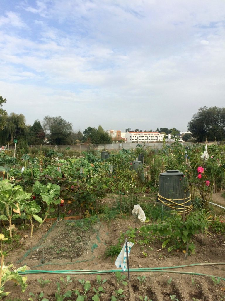 Vegetable garden at Quinta da Gruta in Maia, Portugal